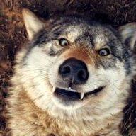 Wolf_3_5_9