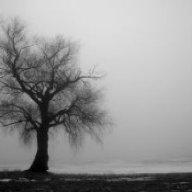 Fog__